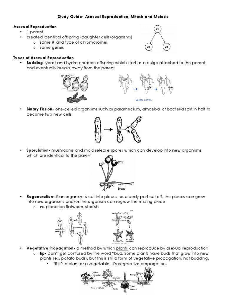 Asexual Reproduction Worksheet Answer Key - Home Student
