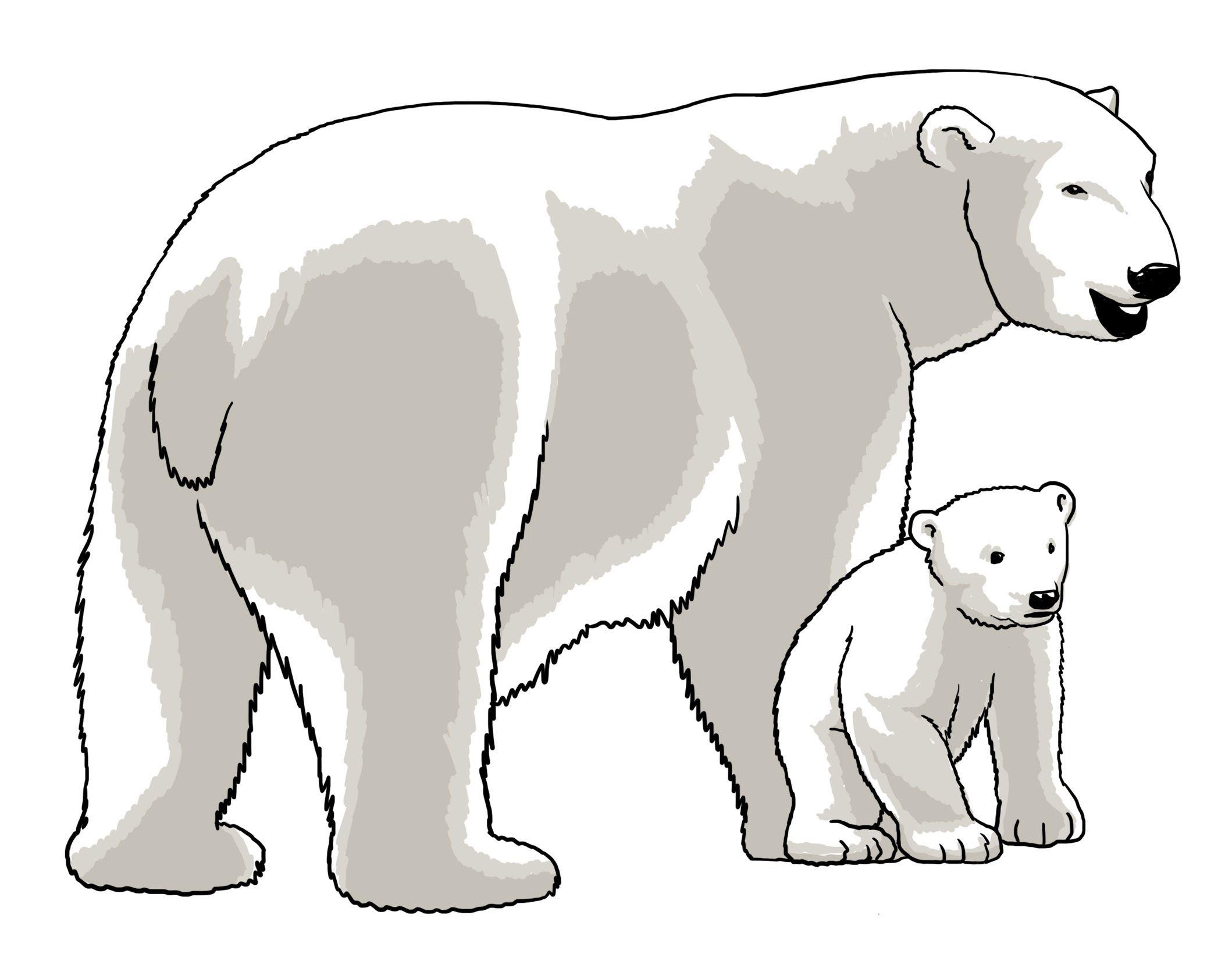 Kostenlose Zeichnungen Von Tieren Poster Bilder Pdf Download Eisbar Bilder Tiere Zeichnungen