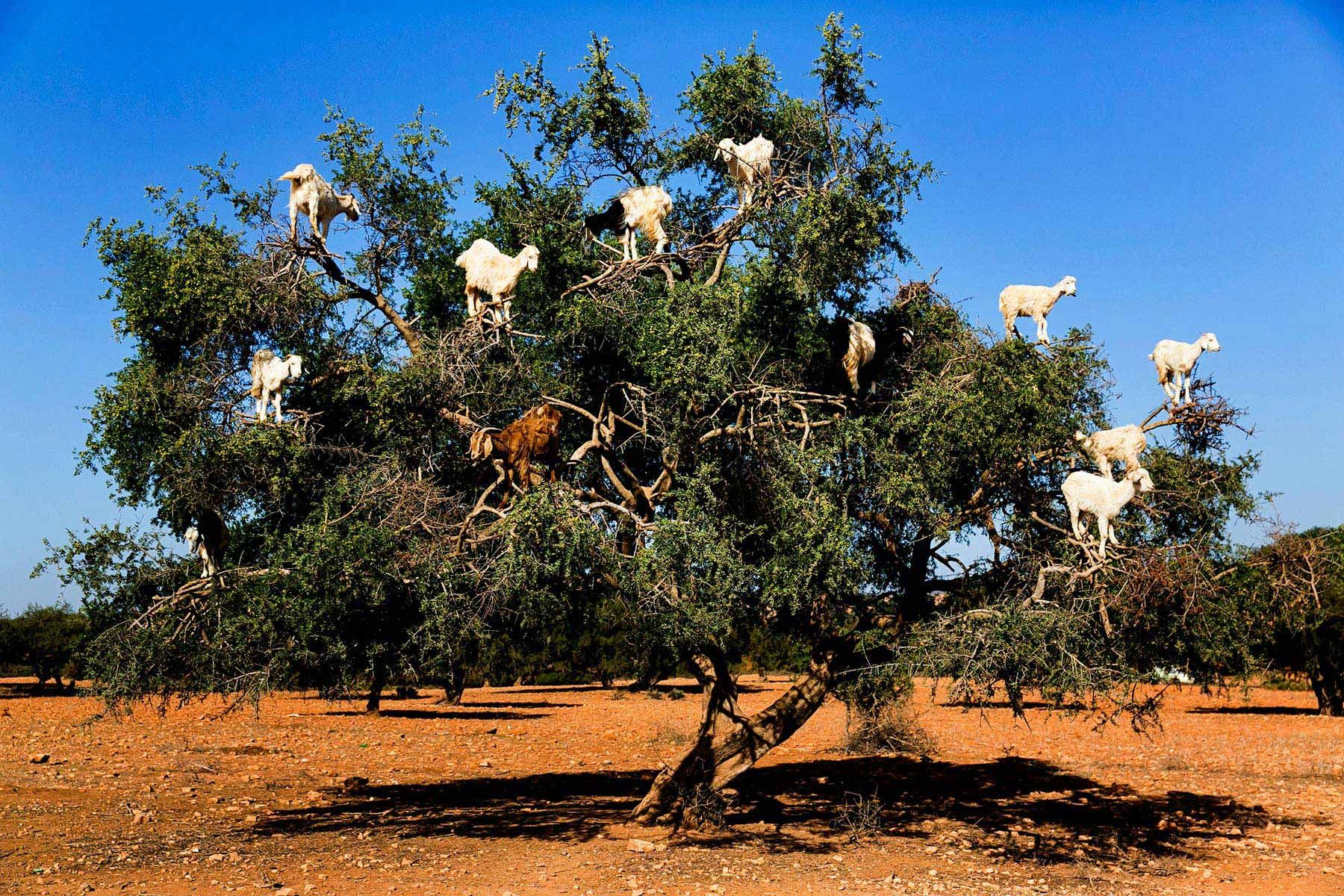Park Art My WordPress Blog_How Long Does Goat Take To Deliver To South Africa