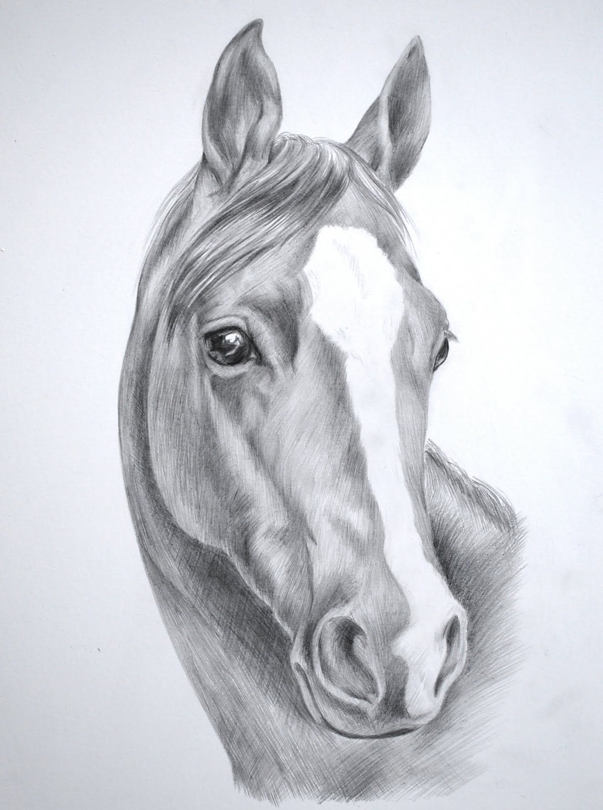 Pencil Sketch Horse Head