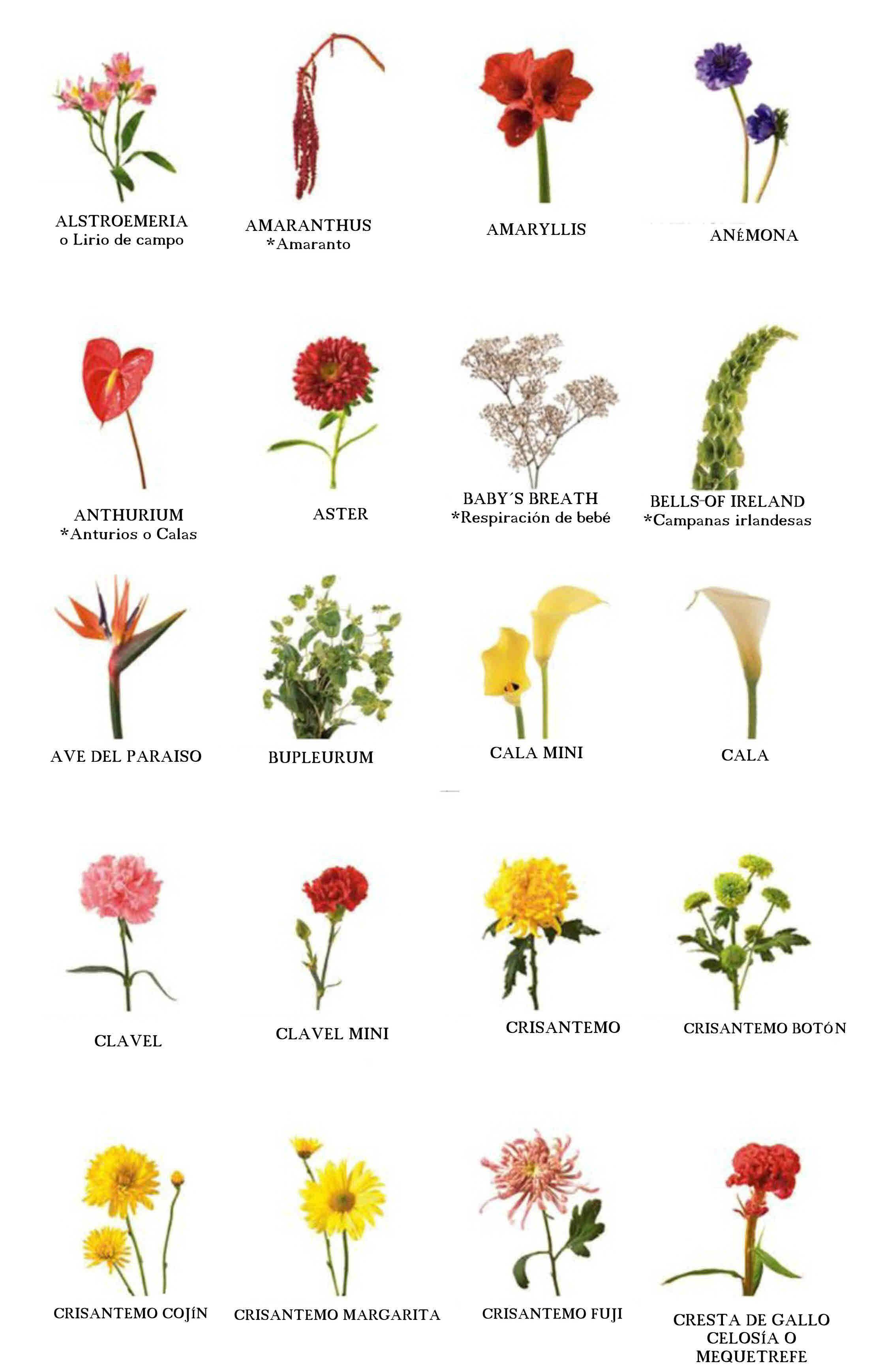 Nuestras abuelas sabían más de flores! Yo recuerdo a la mía, que en ...