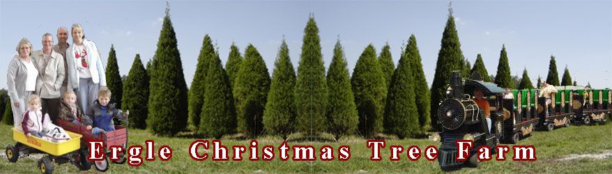 ergle christmas tree farm famly traditions and memories start here in central florida - How To Start A Christmas Tree Farm