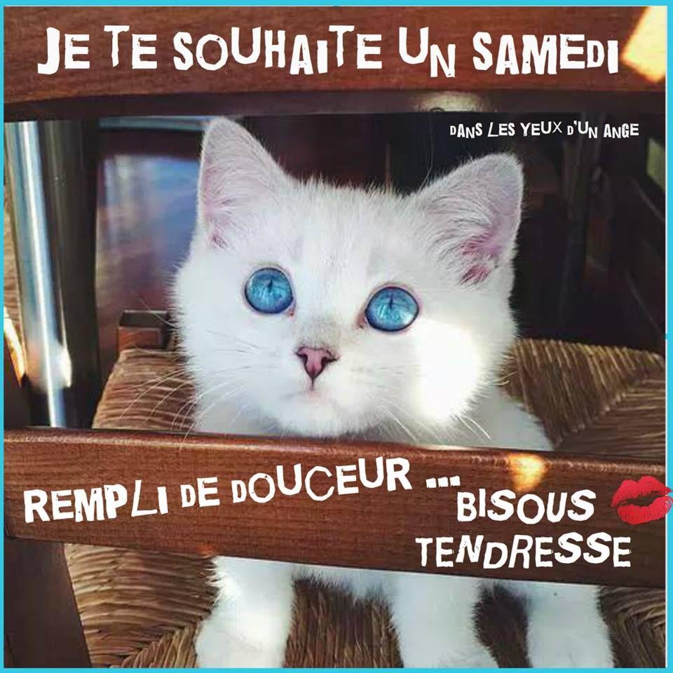 Samedi image #6672 - Je te souhaite un samedi rempli de douceur... Bisous  tendresse - Chaise, Chat, Chaton, Mign… | Cute kittens, Animales, Animaux  les plus mignons