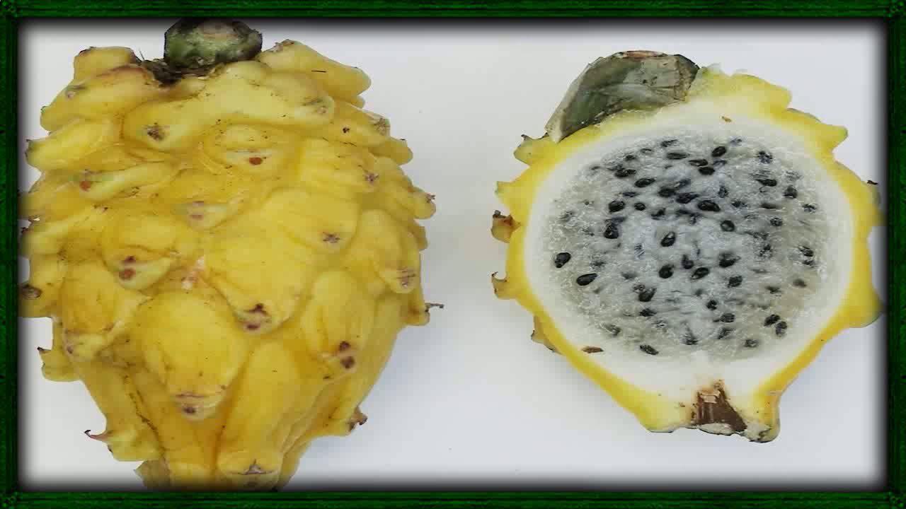 Pitaya Fruta Del Dragon Para Q Sirve La Pitahaya Pitaya Fruta Del