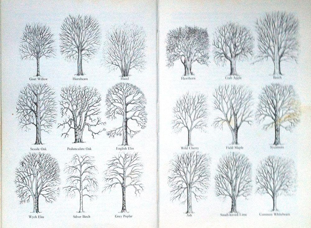 winter_tree_profiles Trees in 2019 Winter trees, Drawings, Tree