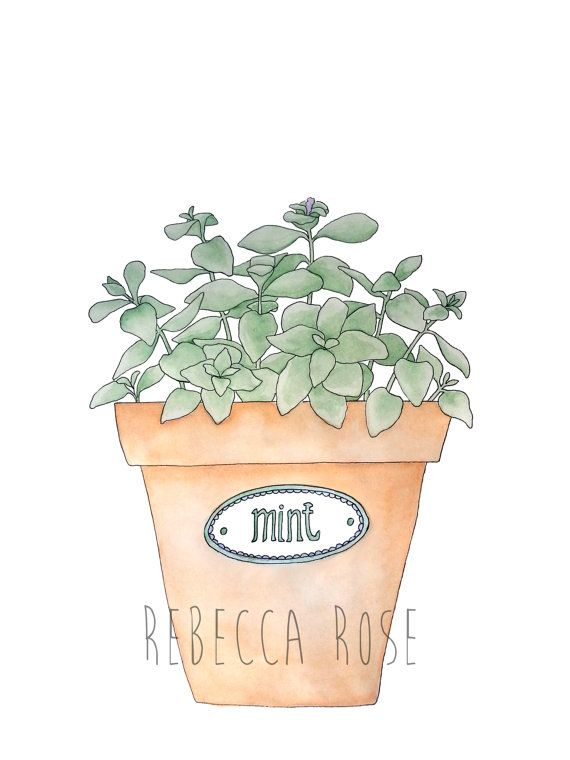 Mint Plant In A Terracotta Pot, Watercolor Print, Kitchen Wall Decor,  Nature Wall
