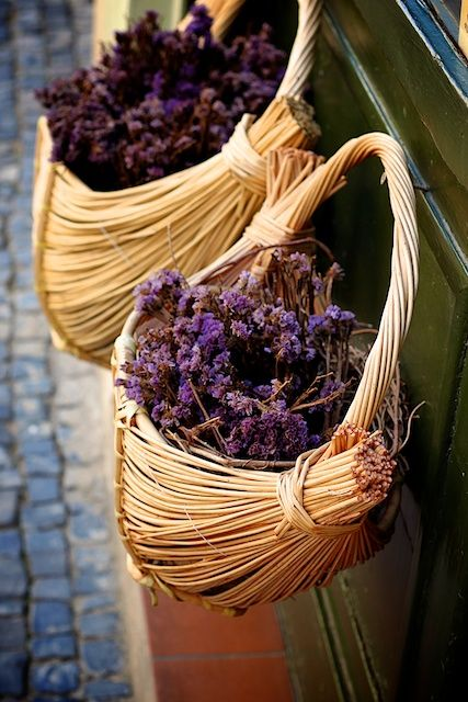 worldofjonp:    Lavender  Prague, Czech Republic