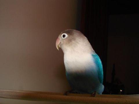 Pepe Di Lermano, my lovely 'love bird'!