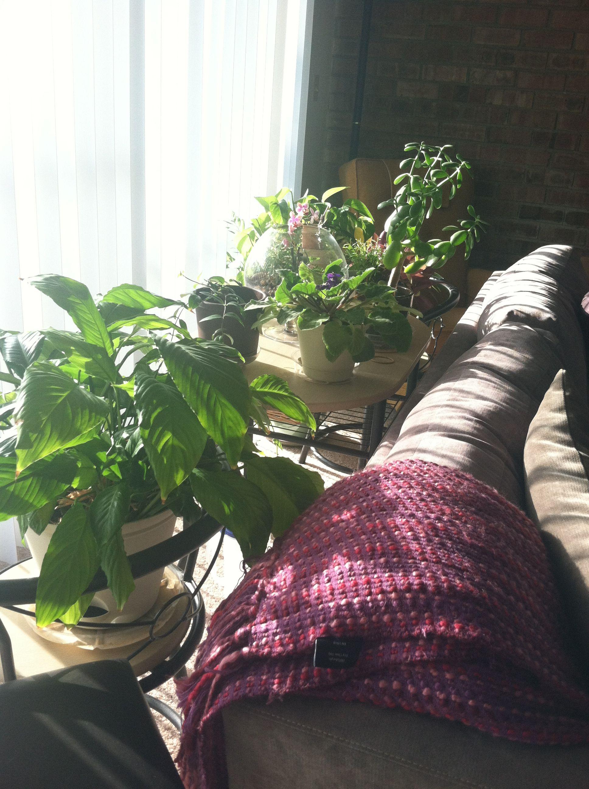 Plants behind sofa