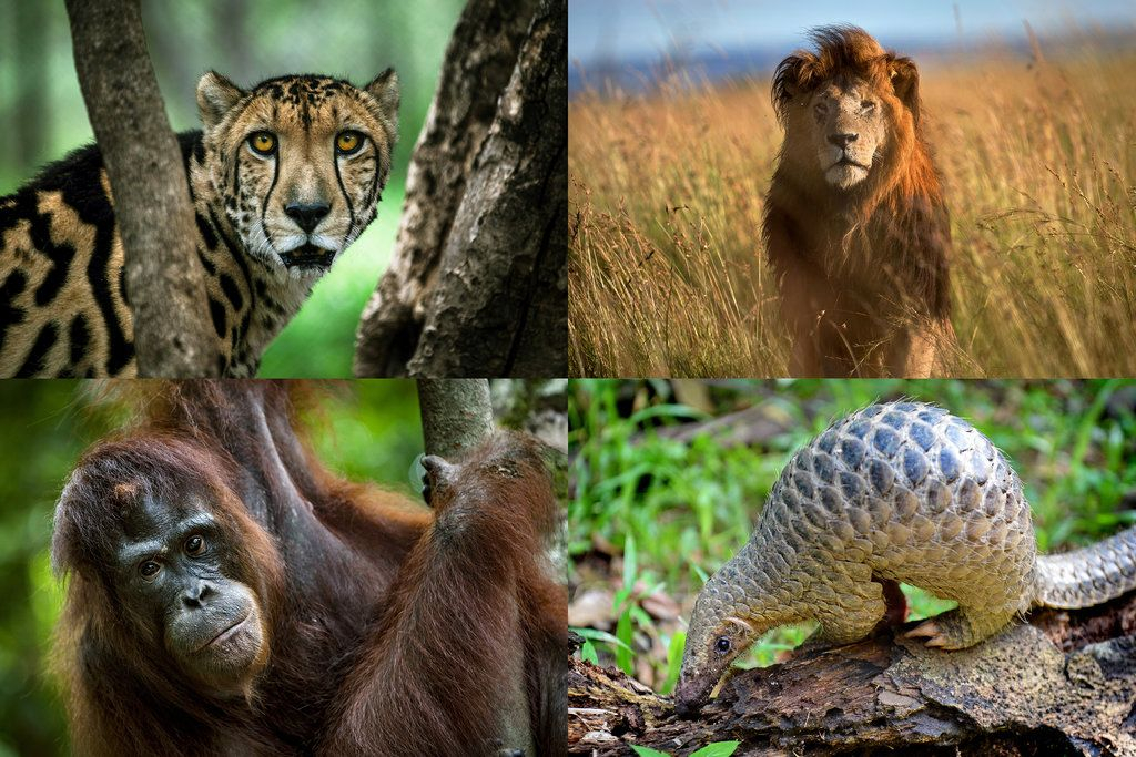 The threatened mass extinction of thousands of animal