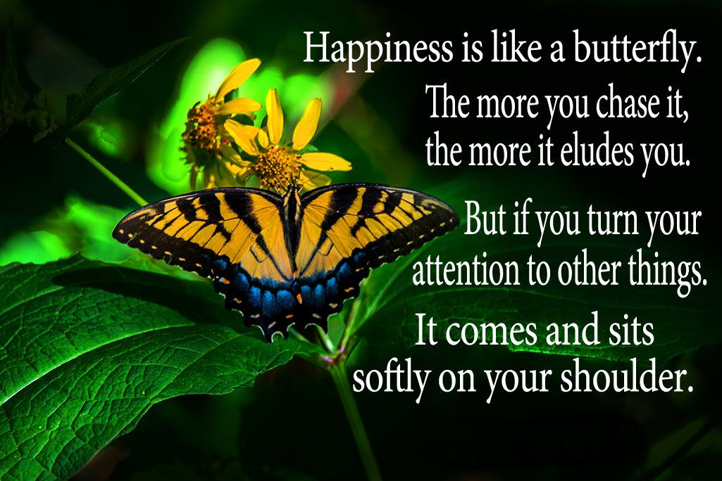 Happiness Is Like A Butterfly The More You Chase It The More It