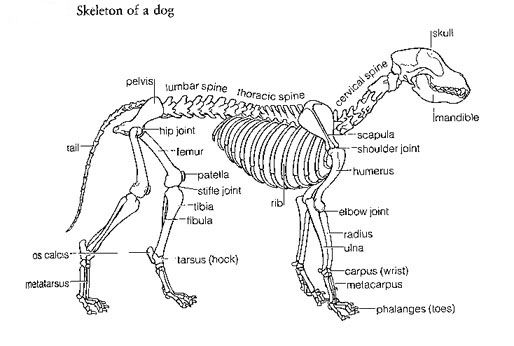 Anatomy 1g 514346 pixels school pinterest anatomy 1g 514346 pixels ccuart Choice Image