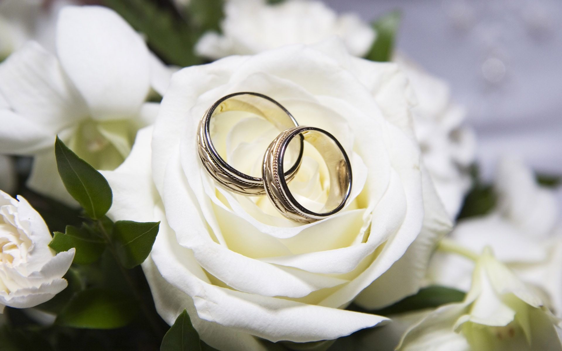 Rose Wedding Couple Rings From Sky Wallpaper