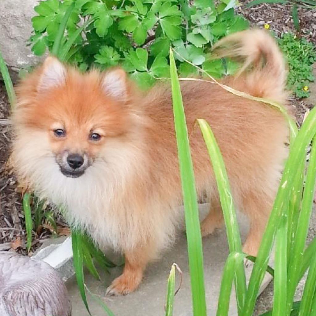 Lost Dog Male Ohio City, Cleveland, OH, USA 44113