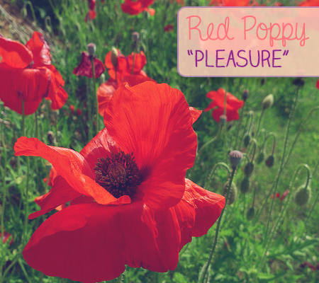 Red poppy pleasure the language of flowers at disneybaby pick the prettiest blooms for mom this mothers day by speaking the secret language of flowers with this handy guide to flower meanings mightylinksfo Image collections