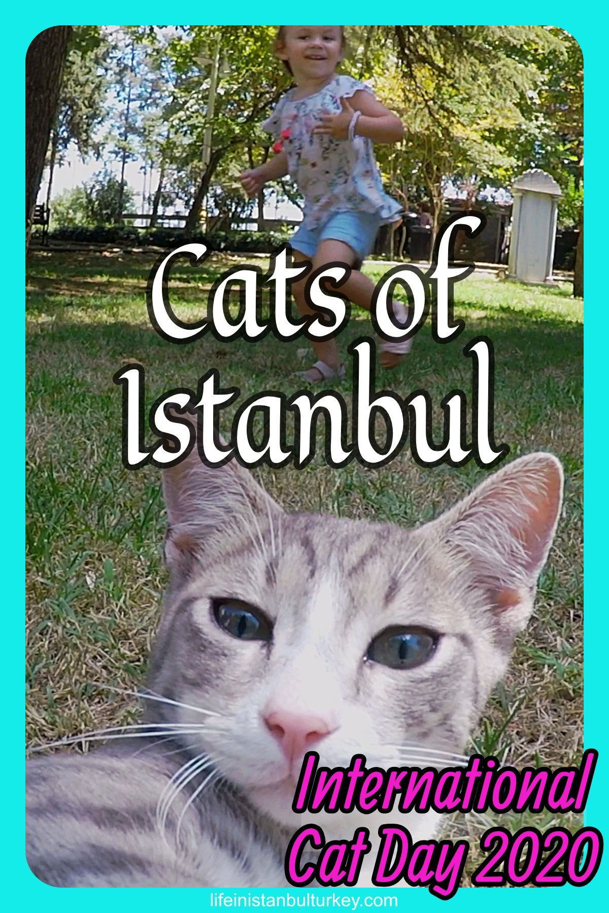 International Cat Day Istanbul 2020 In 2020 International Cat Day Cat Day Cats