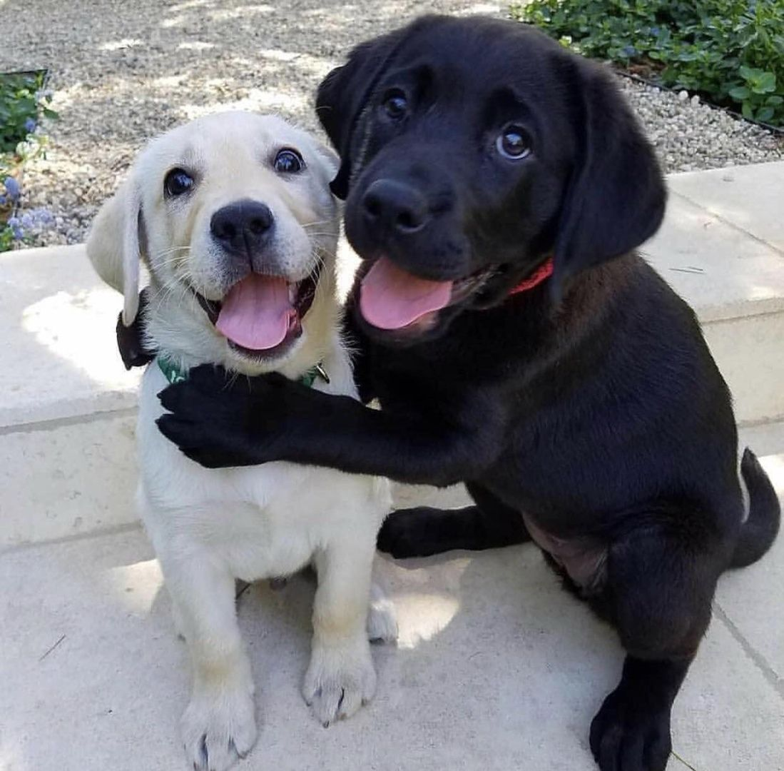 Lovely Brothers Cute Happy Dog Cute Baby Animals Cute Dogs Cute Animals