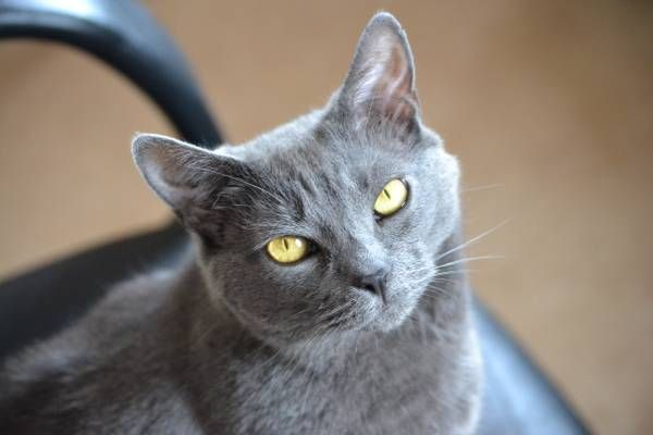 Lost Cat in Central Manchester (Near Police Station) 92