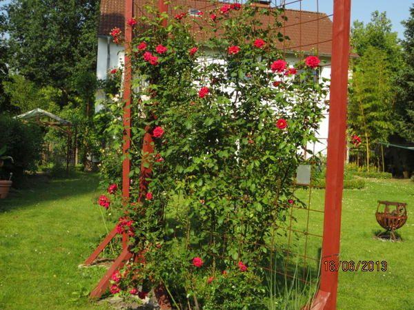 Minigärtchen Gartenvorstellungen - sortiert - Seite 17 ...