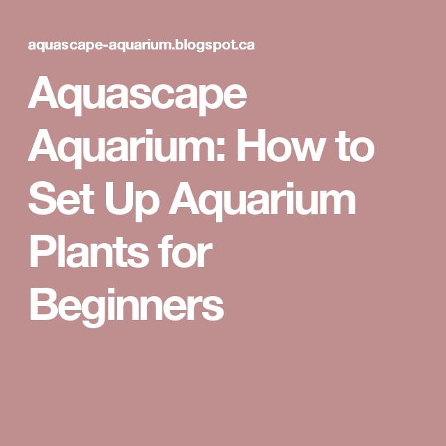 How to Set Up Aquarium Plants for Beginners | Aquascape ...