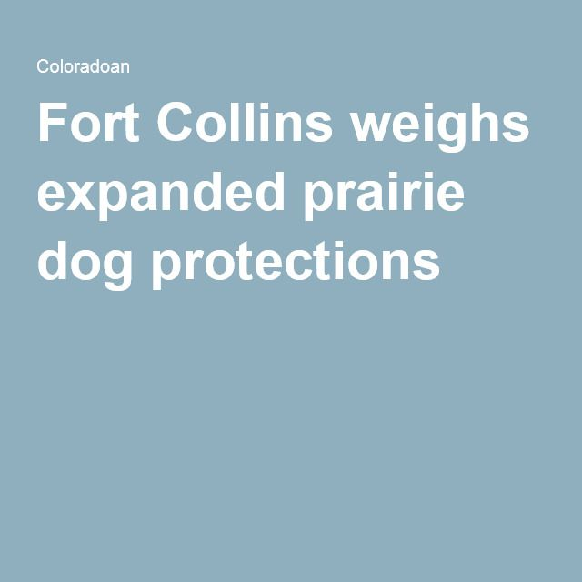 Fort Collins weighs expanded prairie dog protections