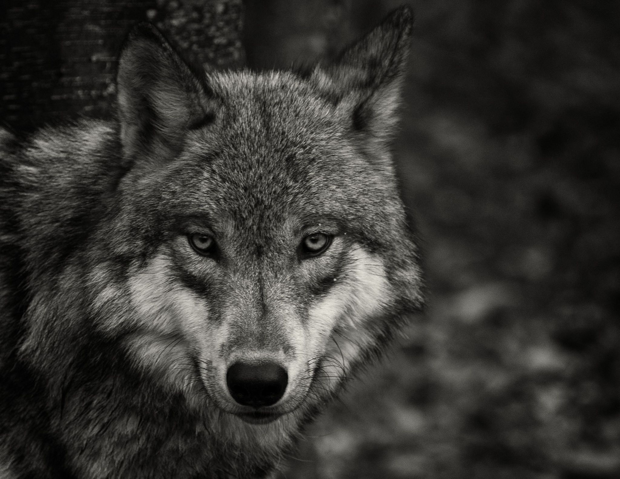 Photograph Curious One by Matthew Krausmann on 500px   Wolf   Wolf