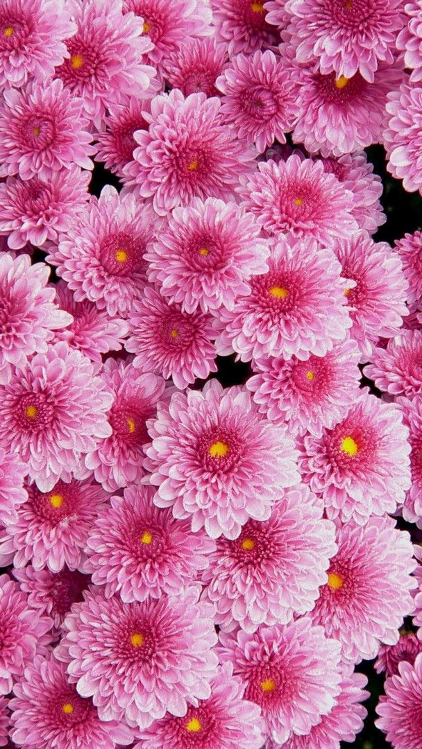 Awesome Pink Flowers Wallpaper iPhone imagens