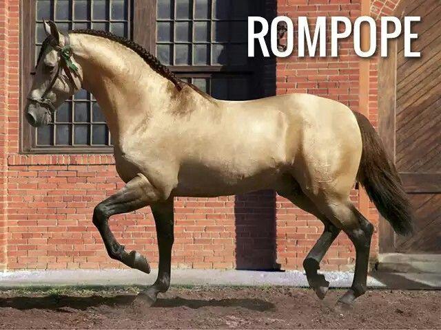 Azteca Rompope