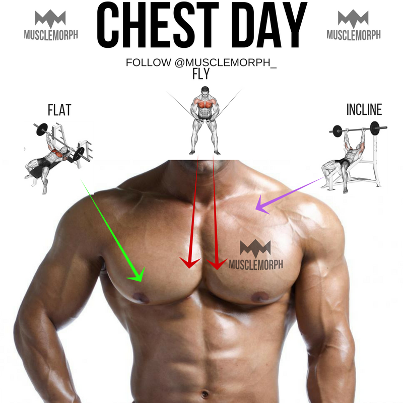 Chest Day Chest Exercise Chest Training Gym Bodybuilding Muscle