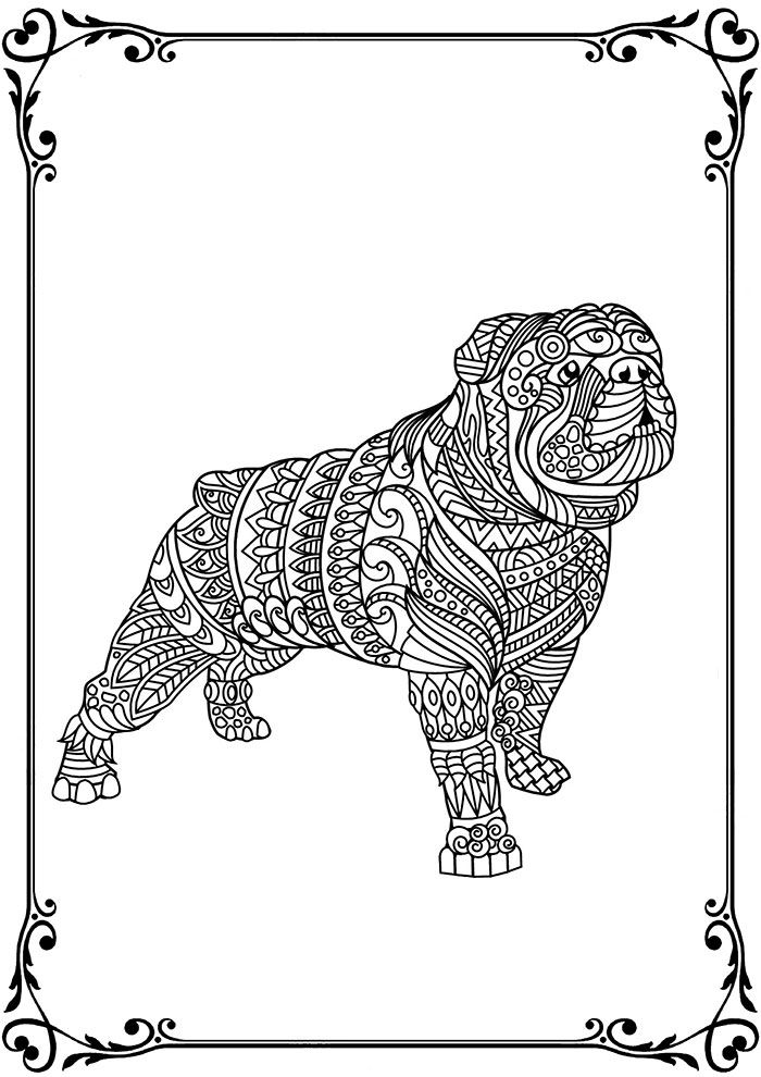 Bulldog Coloring Page for Adults. Inquisitive & sweet
