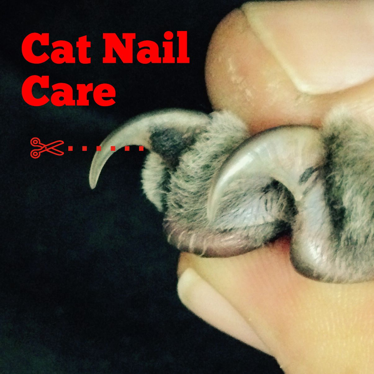 Read how to clip cats\' nails & you\'ll wonder why people declaw the ...