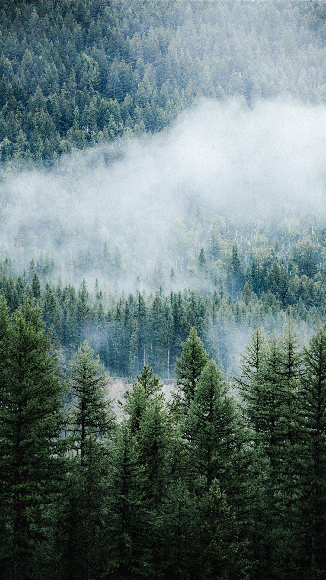 朝の森に霧 木の壁紙 森