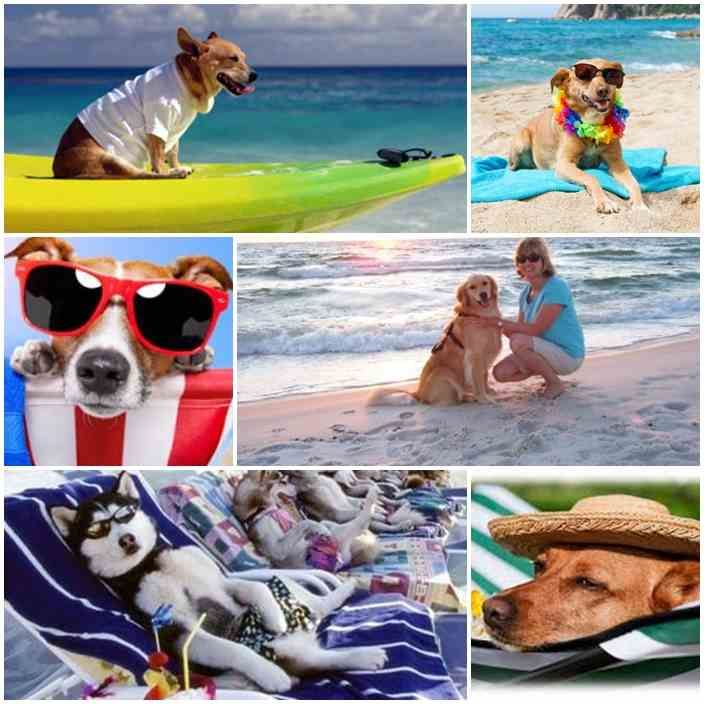 Take the dog for a vacation or to travel to the four-legged friend