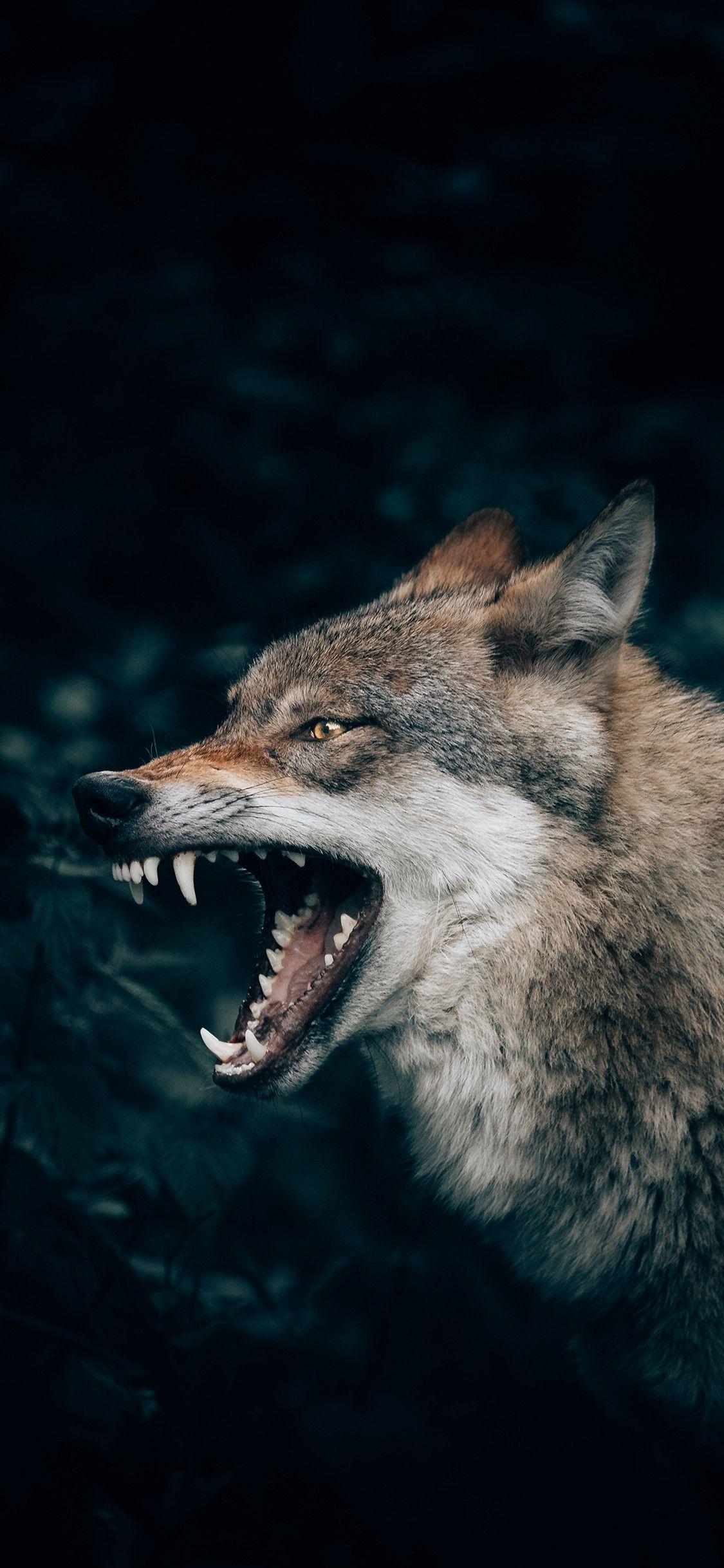 Pin by Evgeniya Angelova on Wolf in 2020 Wolf wallpaper