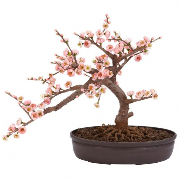 Nearly Natural 15 In H Pink Artificial Cherry Blossom Bonsai Silk Tree 4764 The Home Depot Cherry Blossom Bonsai Tree Bonsai Trees For Sale Indoor Bonsai Tree