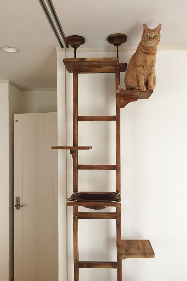 This Cat Climbing Tree Looks Like A Ladder And Offers Great Place For Your To Hang Out