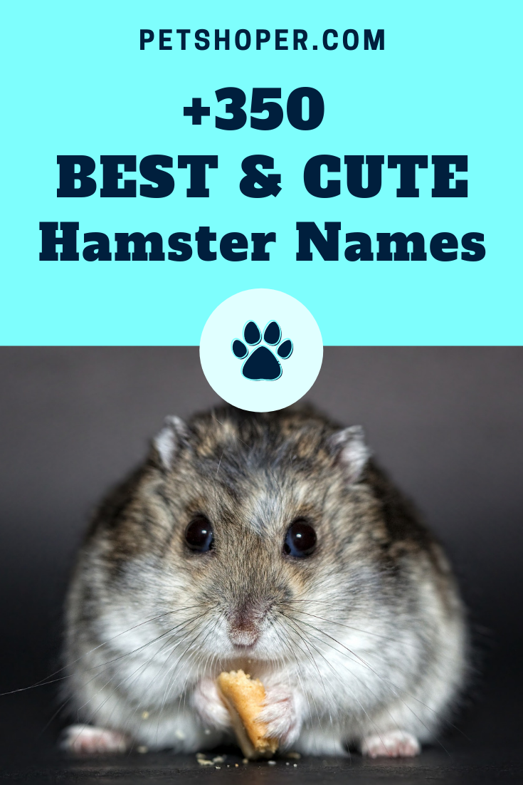 Hamster Names 350 Best Cute Names Ideas Hamster Names Cute