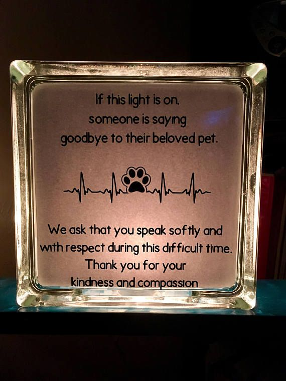 Glass Block Vet Clinic Pet Memorial Light Euthanasia Vet Clinics Vet Medicine Veterinary Clinic
