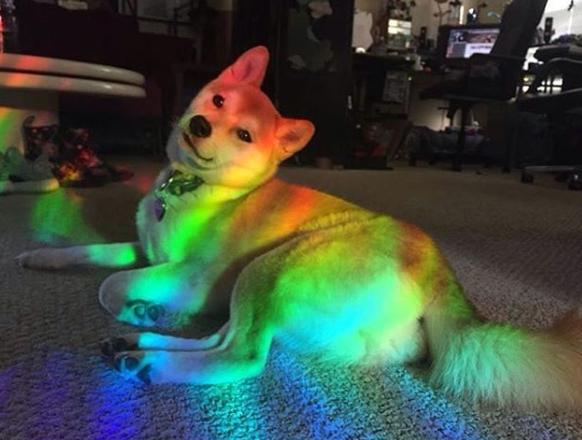 ▲pinterest: lenalovesblack▲ #prism #rainbow #aesthetics