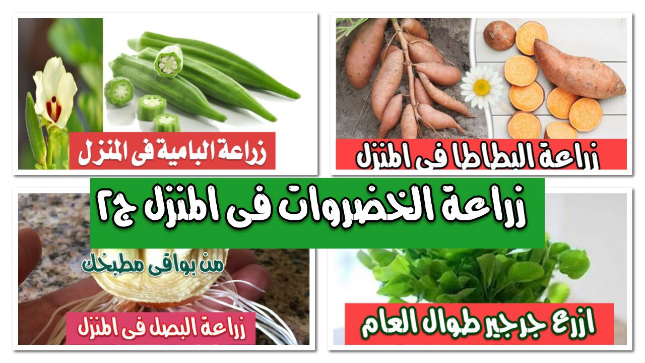 ملف شامل لزراعة الخضروات فى المنزل الجزء Green Beans Vegetables Carrots