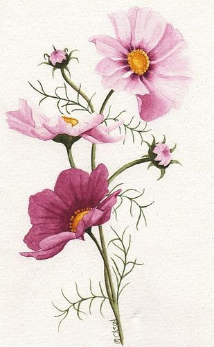 Todos os tamanhos | Pink Cosmos | Flickr – Compartilhamento de fotos!: