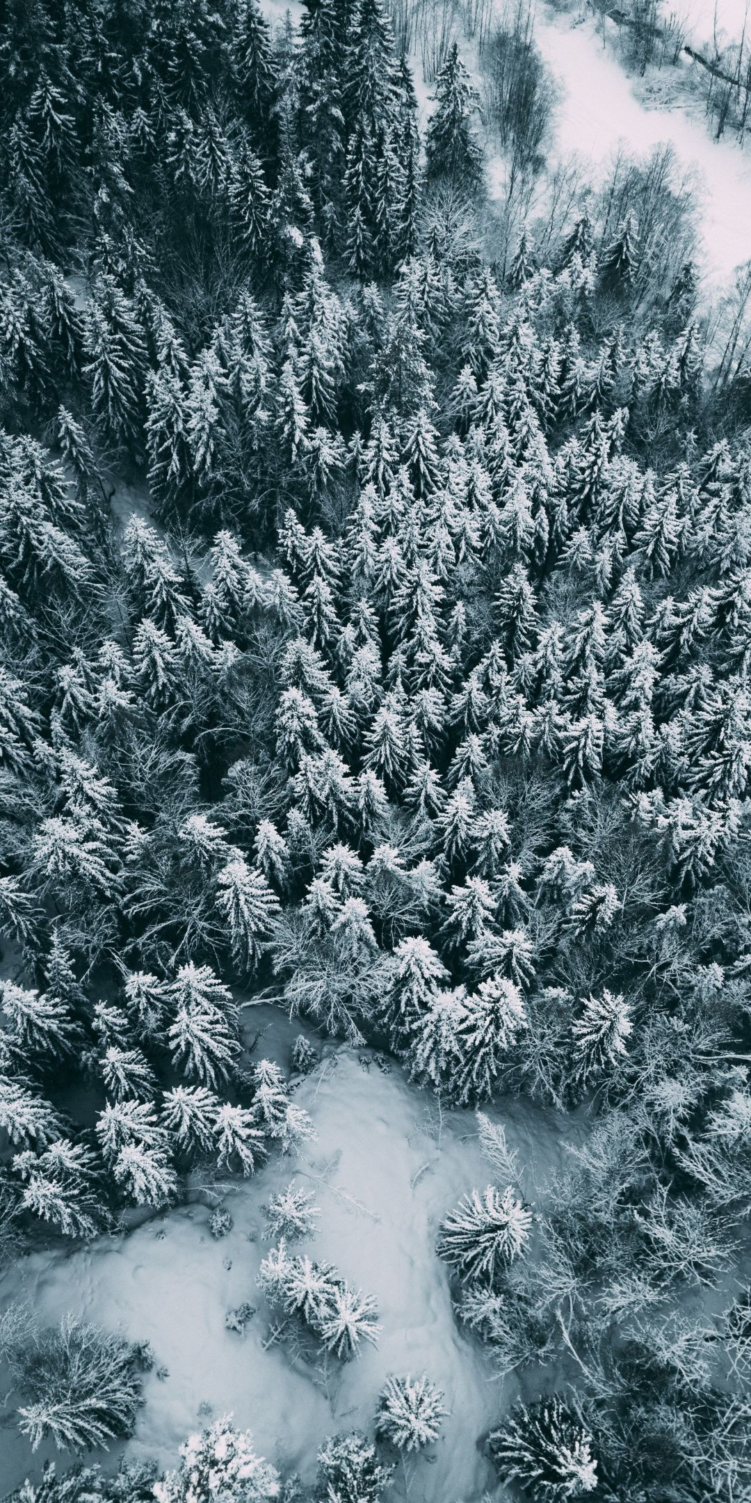 Aerial View Winter Pine Trees Frost 1080x2160