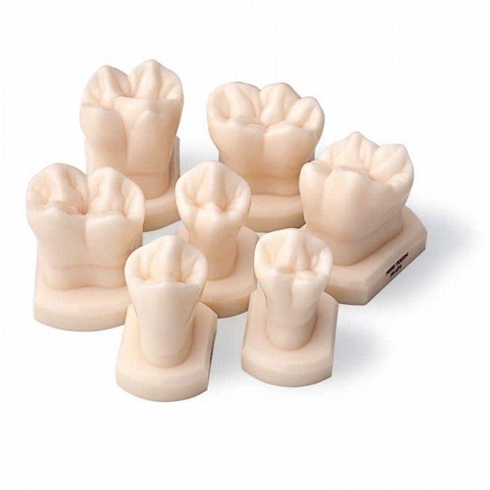 Pin de Myrna Brest en mecanica dental | Pinterest | Dental, Anatomía ...