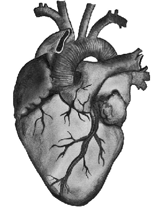 Image Result For Anatomical Heart Heartstrings Pinterest