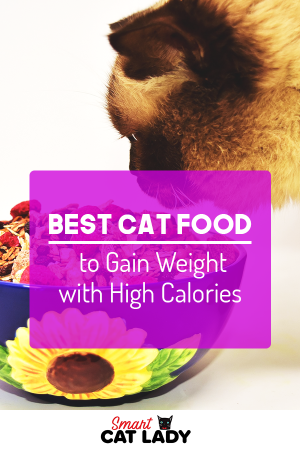 Best Cat Food to Gain Weight with High Calories Best cat