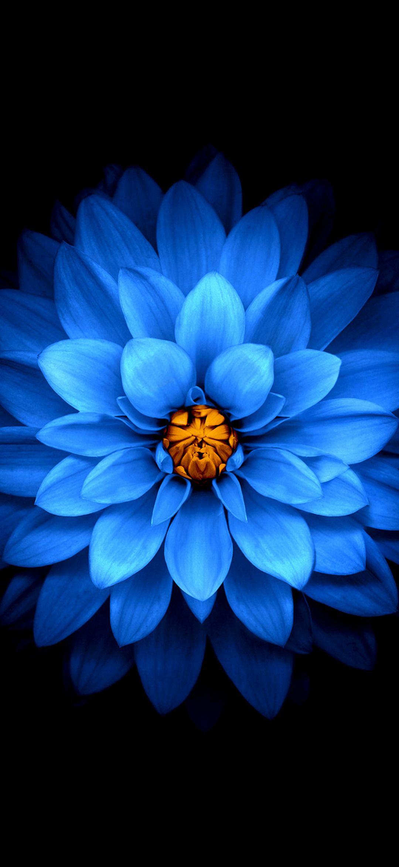 1080x2340 Background Hd Wallpaper 377 Background Hd Wallpaper Flower Wallpaper Flower Phone Wallpaper