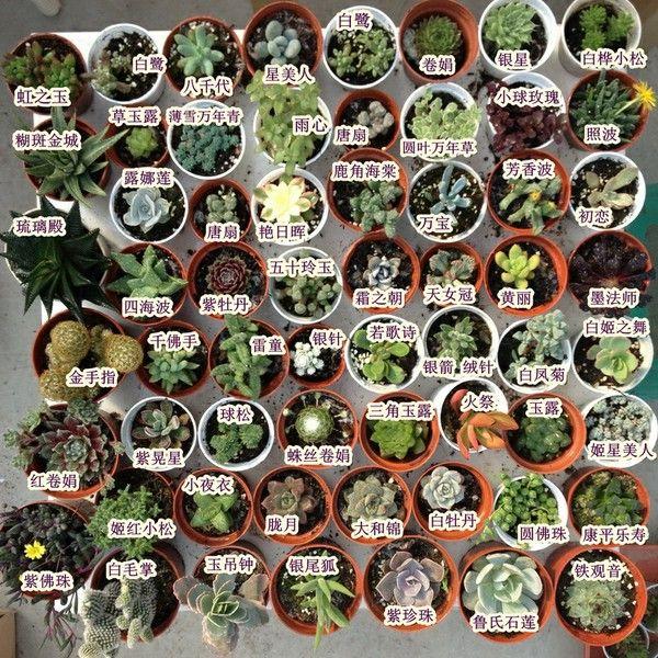 多肉植物的名称,来学习一下~