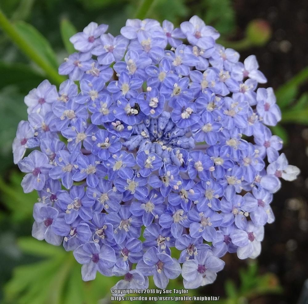Pin On Lavender