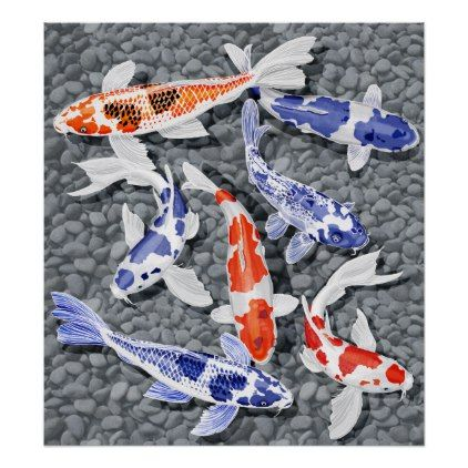 Koi Fish Poster   Decor Diy Cyo Customize Home