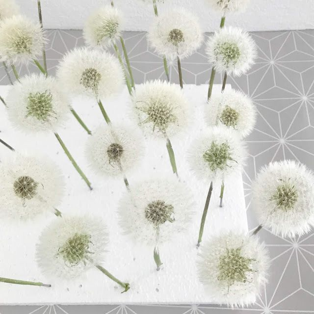 Photo of Make dandelion durable as a gift (with a line and thread)